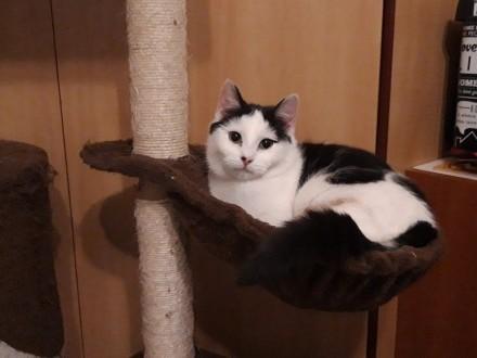 7 miesięczna kotka Amelka szuka domu