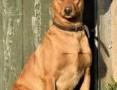 'MIKUŚ - 3 letni, delikatny i wrażliwy psiak szuka domu