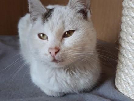 Milka-kotka idealna a jednak bezdomna   wielkopolskie Poznań