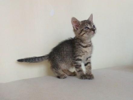 Mała kotka Żelka szuka domu