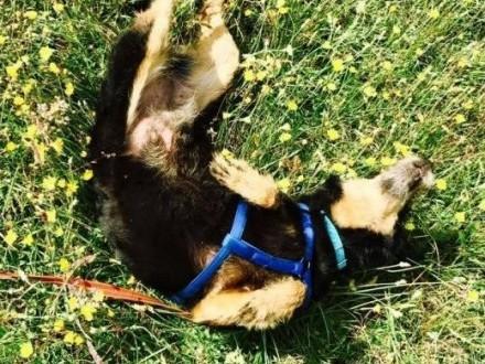 Krecia-6 letnia  radosna sunia w typie terriera czeka na dom!   mazowieckie Warszawa