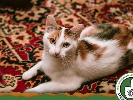 Basia czeka na dom