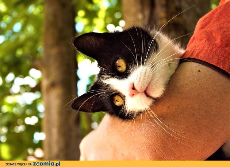 Pendolino - cudowna koteczka :)