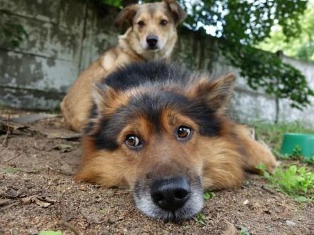 Misio i Lena  wspaniale zżyci - podaruj im wspólny dom!