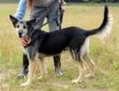 Kochany Baluś - piękny, mądry pies :)
