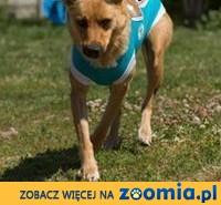 ok. 2letnia przemiła Astra szuka nowego domu !,  mazowieckie Warszawa