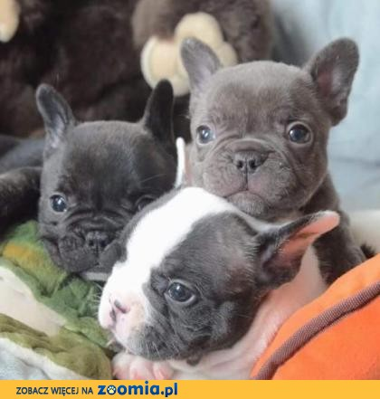 Najnowsze Ogłoszenia: oddam psa, oddam szczeniaka – Psy i szczeniaki szukają VE47