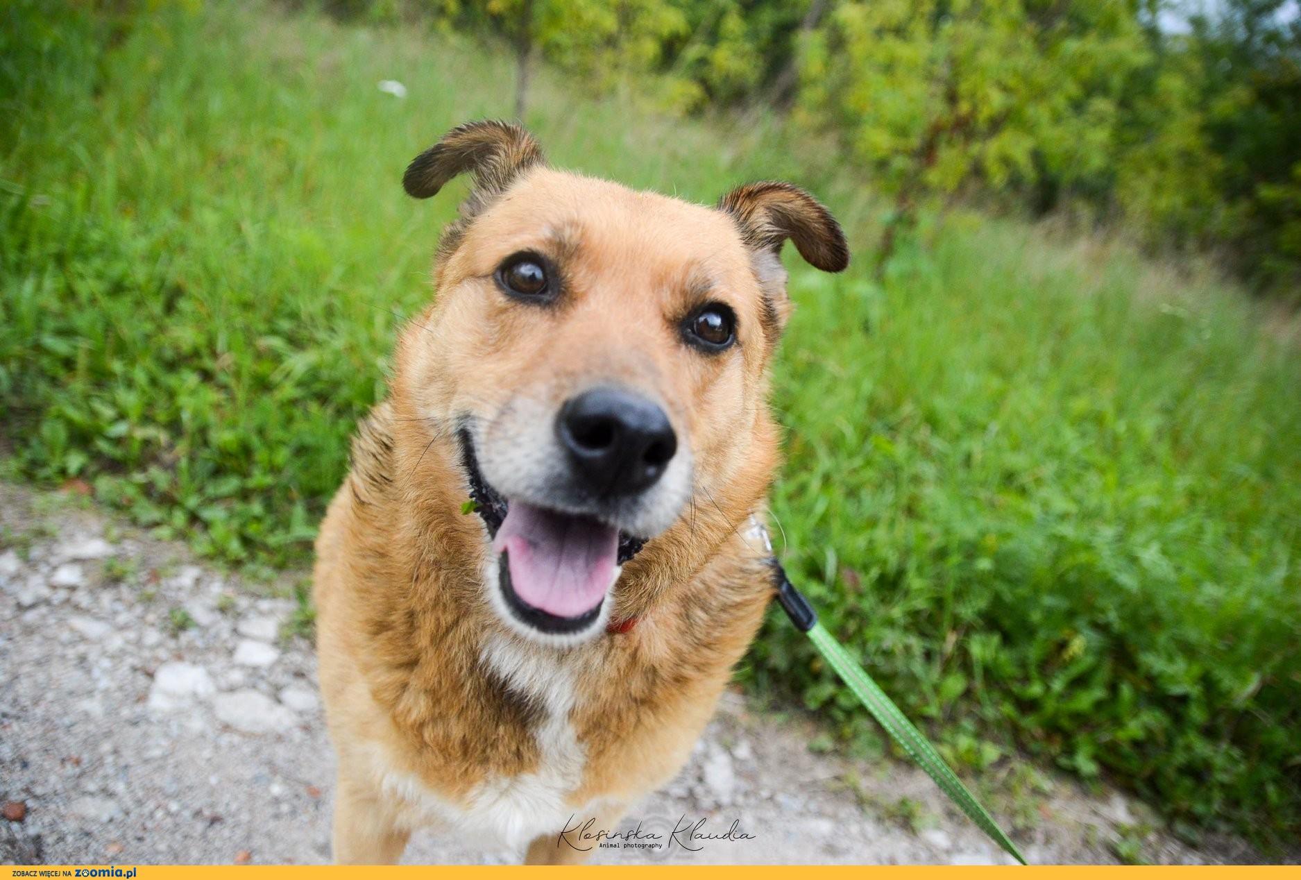 Spokojna Astra, cudowna ruda piękność szuka kochającego domu!