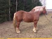 Krycie Konie Zimnokrwiste