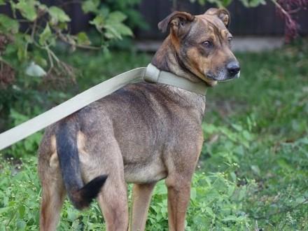 Pasterz - weź mnie w ramiona i nie puszczaj! Super pies szuka domu
