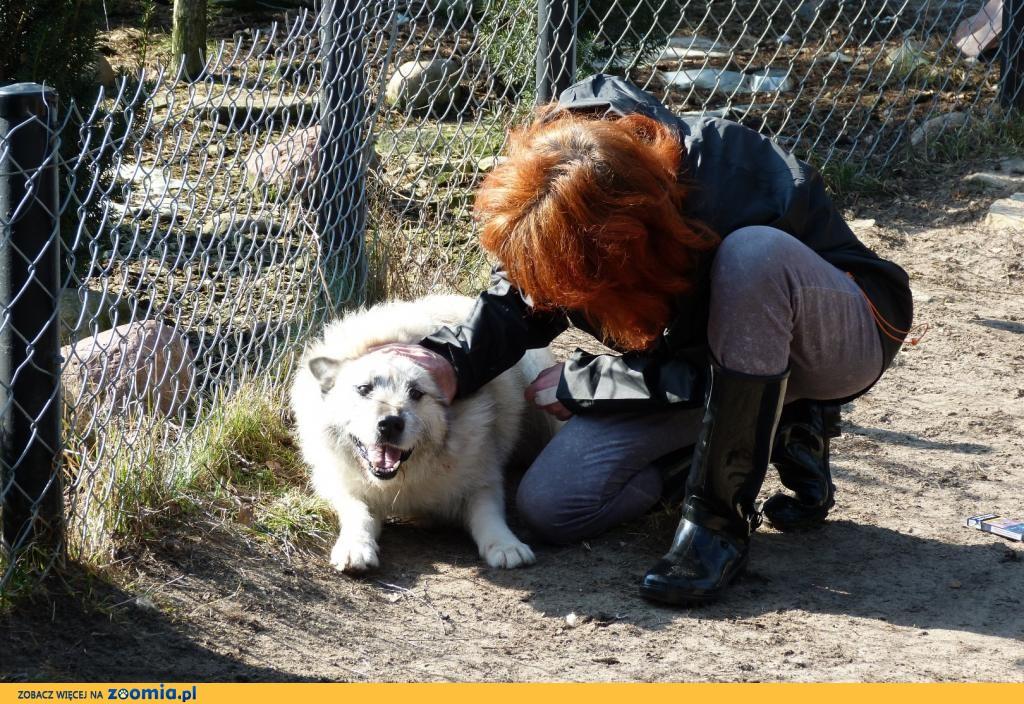Iwan, wspaniały pies, dostojny, mądry - do pokochania!