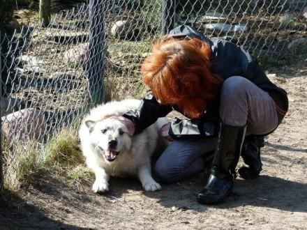 Iwan  wspaniały pies  dostojny  mądry - do pokochania!