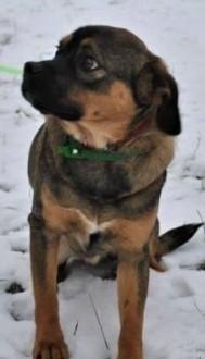 DŻEKI - młody  przerażony schroniskiem psiak pilnie szuka domu!