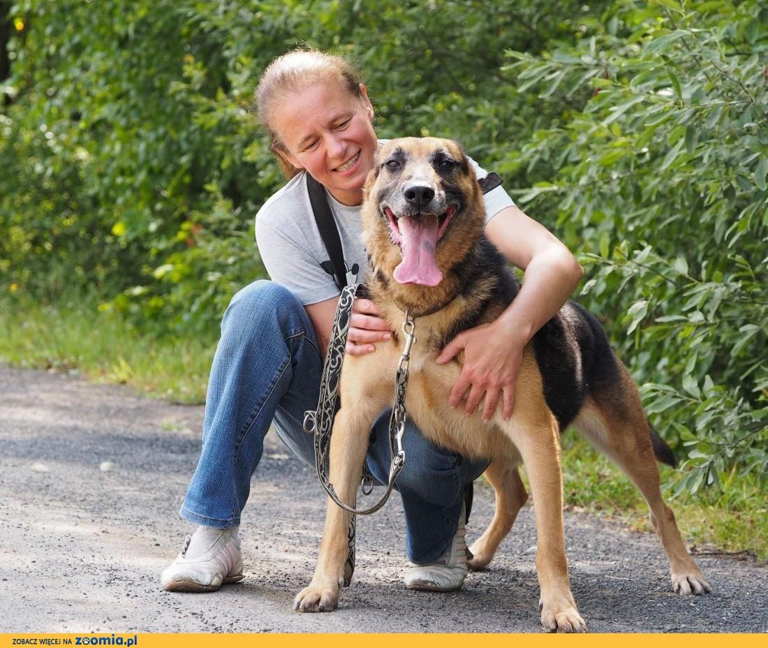 Wulkan-energiczny i dynamiczny pies w typie owczarka!,  śląskie Częstochowa
