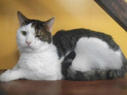 Pani Dastana trafiła do Domu Opieki -  on do schroniska dla zwierząt   warmińsko-mazurskie Olsztyn