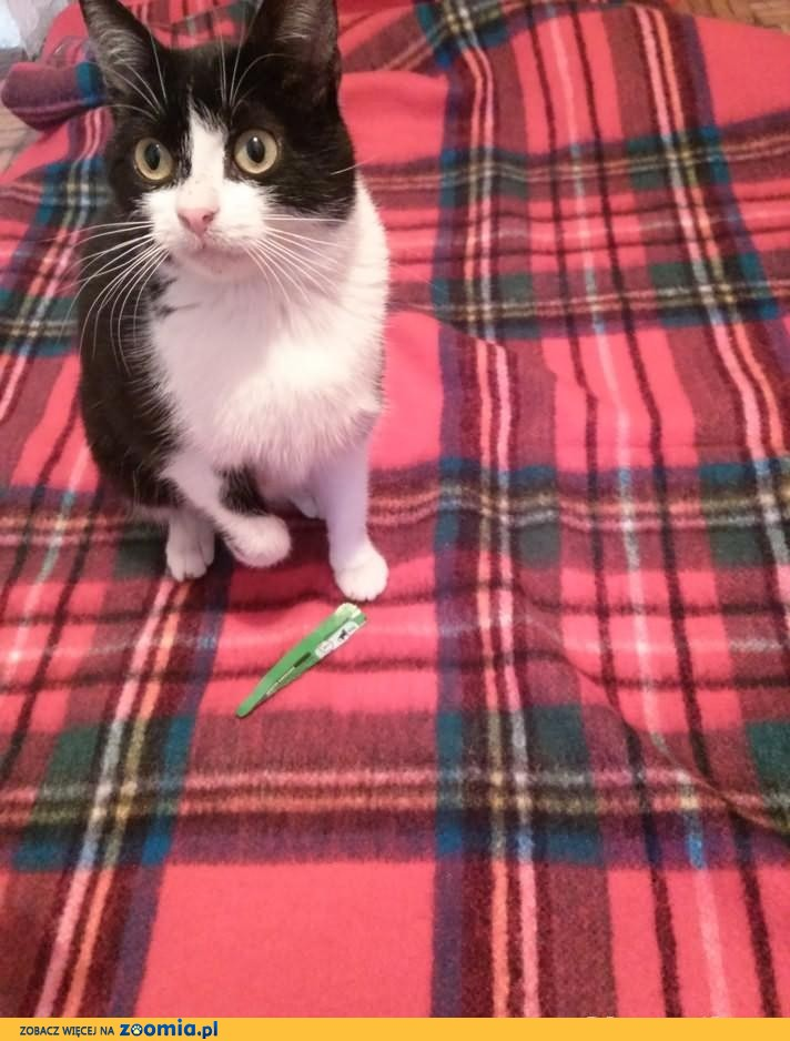 bardzo lagodna koteczka poszukuje domu i Przyjaciela