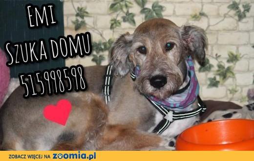 Emi szuka domu !!!,  mazowieckie Warszawa