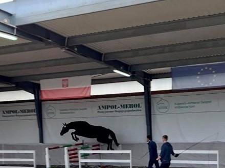 kupię konia do sportu