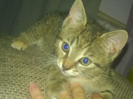 Mała koteczka Coco szuka domu