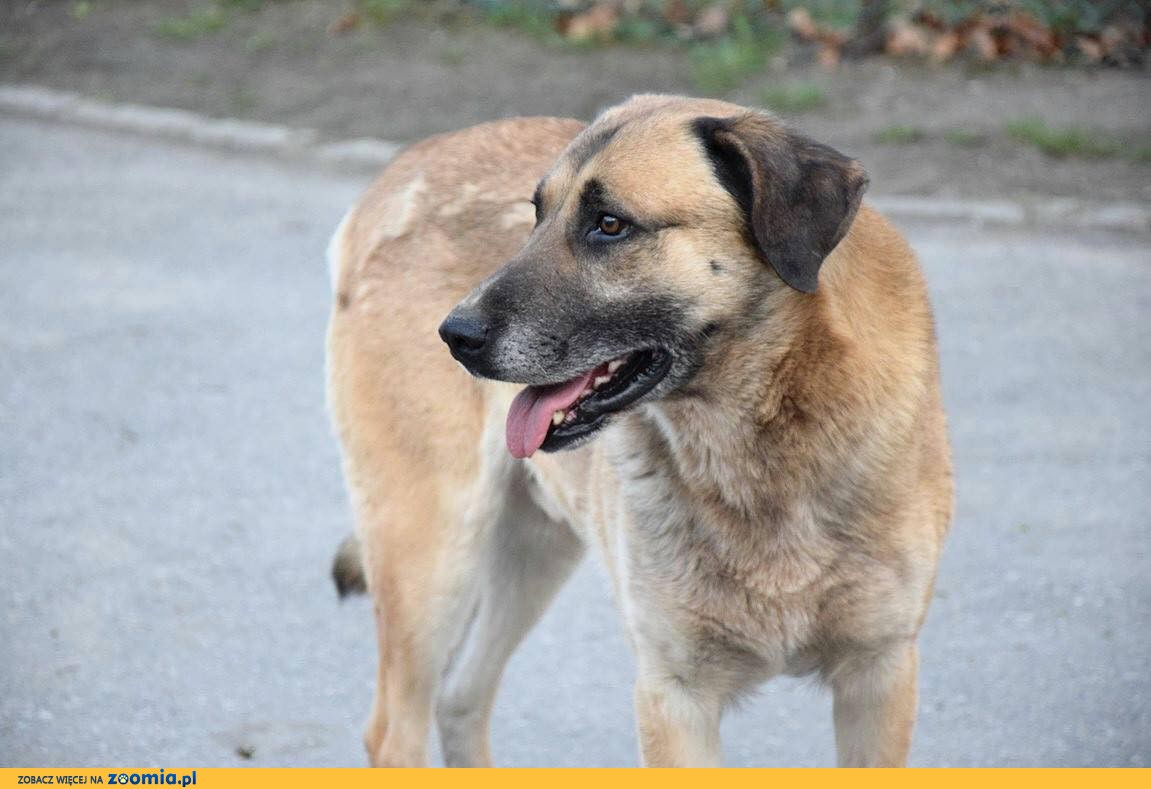 Cudowny psi staruszek szuka miłości i domu!