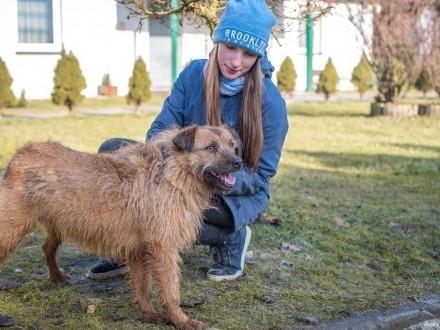 Pogo-bezkonfliktowy  uczuciowy i kudłaty pies!