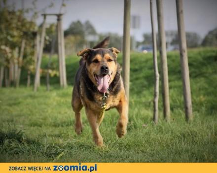 Figaro - czarujący psi śpiewak