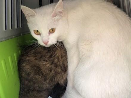 Kociaka (dziewczynę) całkowicie biała