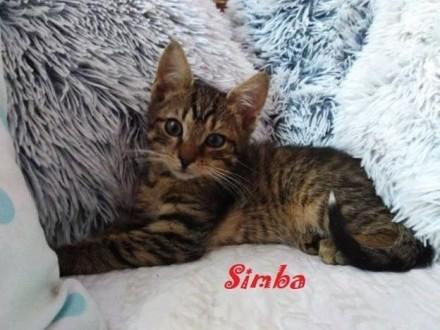 Julek i Simba