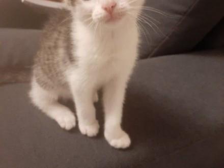SASZA - 3 miesięczna kotka szuka swojego człowieka!   wielkopolskie Poznań