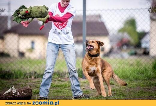 LEJLA aż kurczaki z ta sunią nie ma draki,  małopolskie Kraków