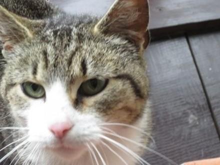 Młoda bardzo fajna kotka szuka schronienia    mazowieckie Warszawa