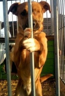 Karmel - kochany oddany psiak szuka domu