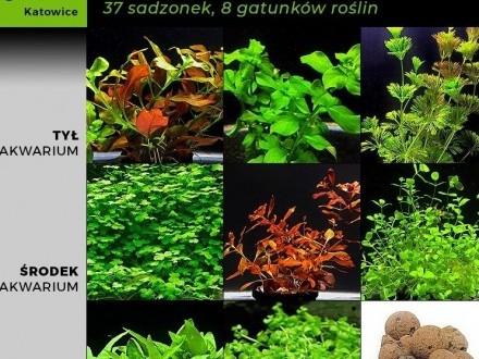 Zestaw roślin do małego akwarium  37 sadzonek  8 gatunków +GRATIS