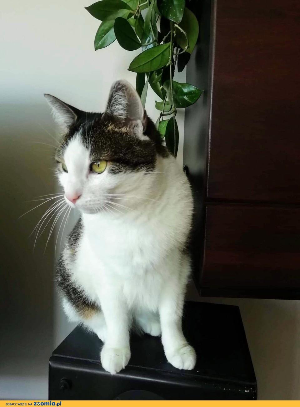 Ułożone, domowe koteczki szukają kochającego domu!