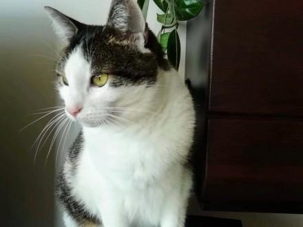 Ułożone  domowe koteczki szukają kochającego domu!