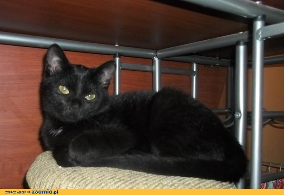 6 miesięczna kotka Tiara do adopcji !