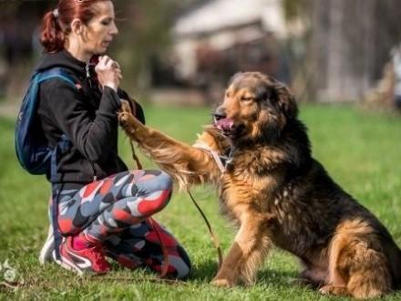 BROOKLYN - kawał psa z charakterem! Takich jak on jest niewiele!   mazowieckie Warszawa