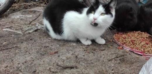 Pędzelek  12 miesięczny KOCUREK szuka domu   Koty pospolite cała Polska