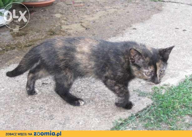 Dwa małe kotki szukają domu.