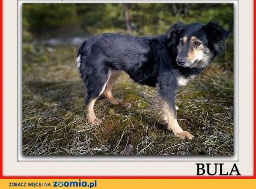 Średnia 13 kg,sterylizowana,przyjazna,b.łagodna,tulaśna sunia BULA.Adopcja.,  mazowieckie Warszawa