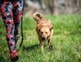 MARIO - siła charakteru, uroda i wdzięk - to nie pies z cicha pęk!,  świętokrzyskie Kielce