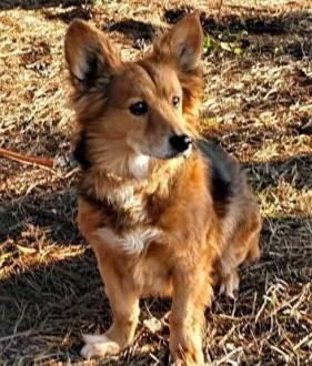 LISEK - kochany psiak  uratowany od śmierci prosi o dom!   mazowieckie Warszawa