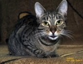 Dwuletnia kotka Danusia szuka domu