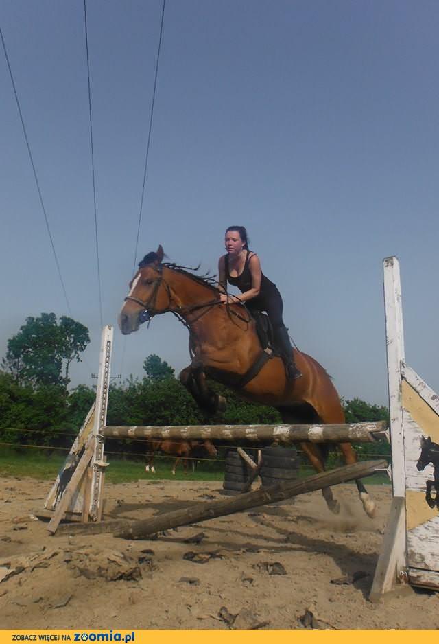 Wezmę konia w dzierżawę za koszty utrzymania