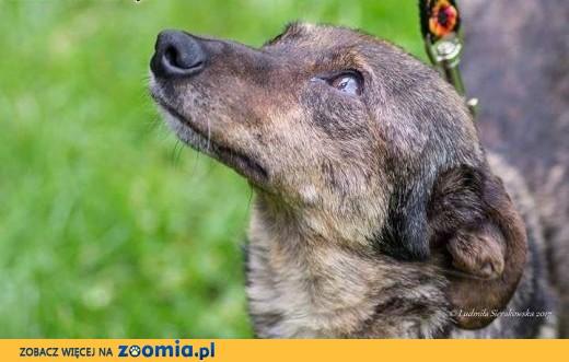 Luna około 2 letnia sunia szuka domu,  mazowieckie Warszawa