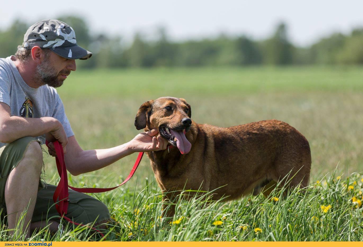 Lord, POSOKOWIEC mix, kontaktowy, nieskonfliktowy pies do adopcji