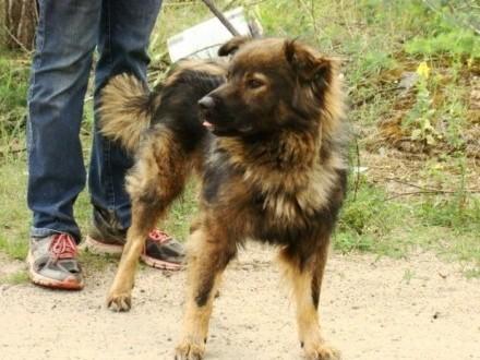 3 lata 18 kg łagodny towarzyski spokojny pies MISIO_Adopcja_