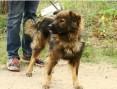3 lata,18 kg,łagodny,towarzyski,spokojny pies MISIO_Adopcja_