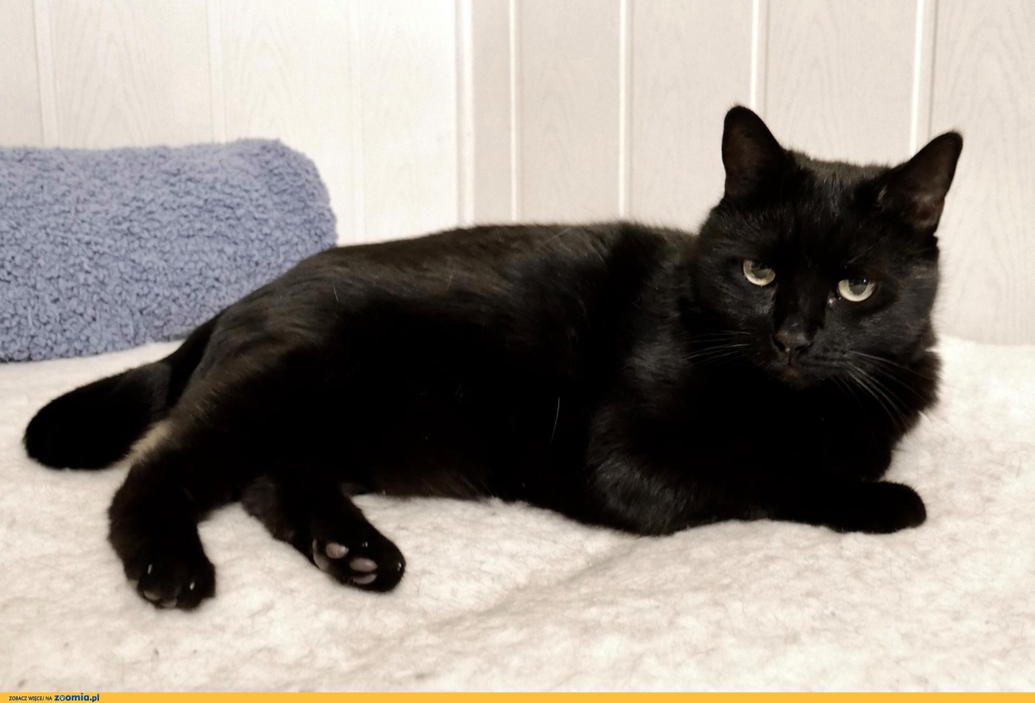 Zuzia - czarna pantera