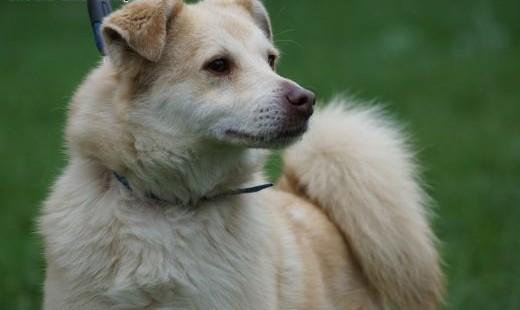 Flavio młody psiak szuka domu!   Kundelki cała Polska